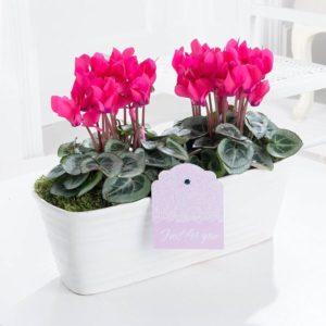 Seasonal Plant Gifts
